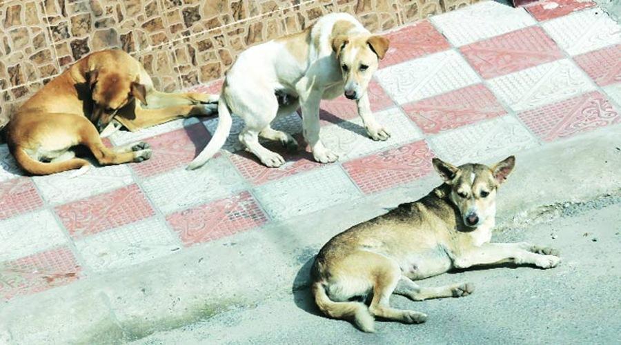 Nagaland bans sale of dog meat