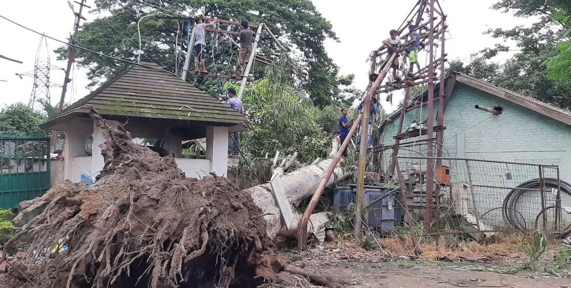 Uprooted tree snaps power line at Dimapur COVID-19 Hospital