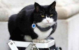 Palmerston, Britain Foreign Office cat &  a social media phenomenon, retires