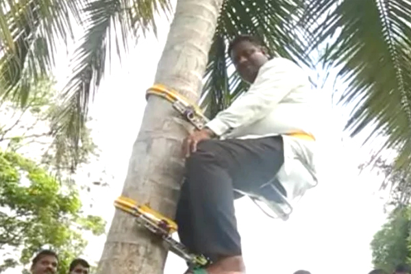 Minister climbs tree