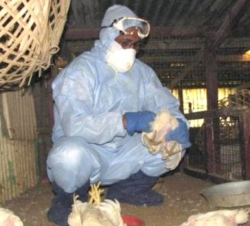 avian influena