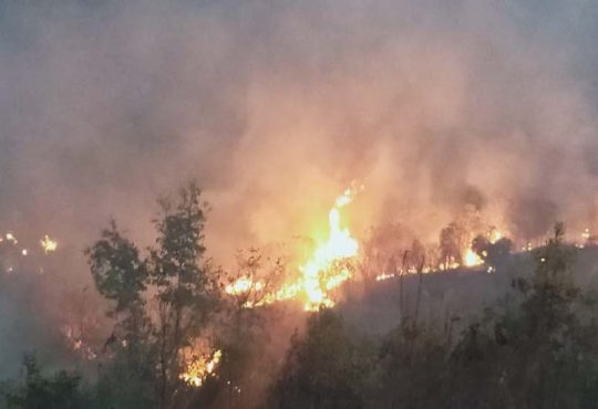 Kohima jungle fire