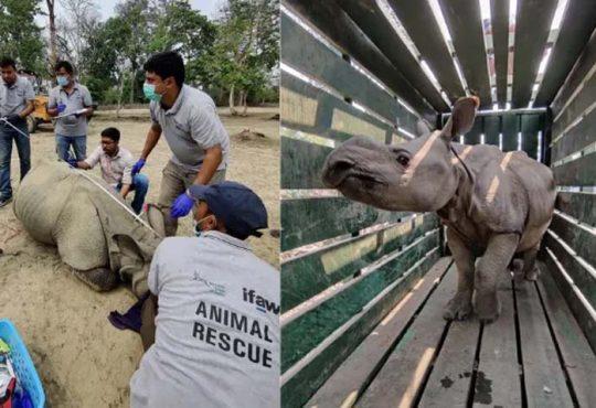 rhino rescue