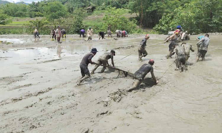 farmers paddy field